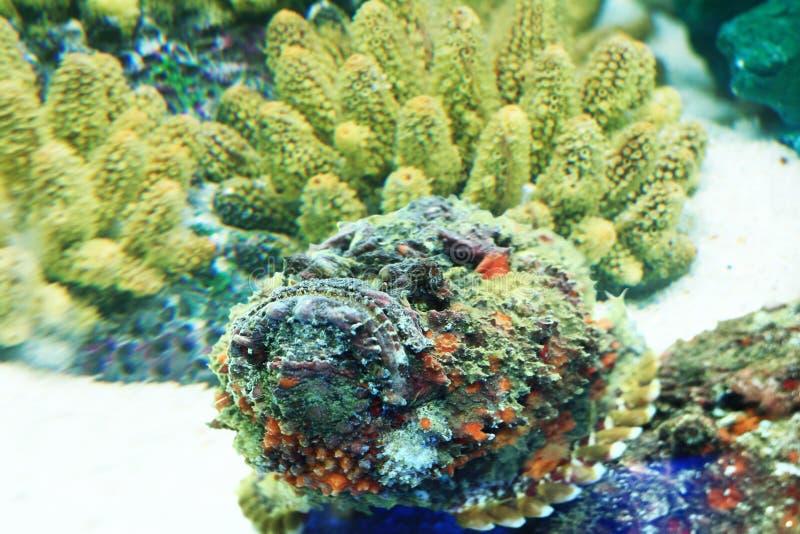 Peixes de pedra imagem de stock
