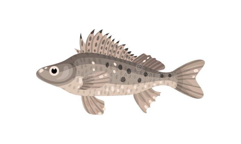 Peixes de Ruffe com aletas espinhosos Animal marinho predatório Criatura do mar Tema subaquático da vida Projeto liso do vetor ilustração royalty free