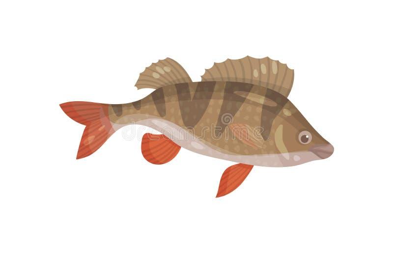 Peixes de Ruffe com aletas espinhosos Animal marinho predatório Criatura do mar Tema subaquático da vida Projeto liso do vetor ilustração stock