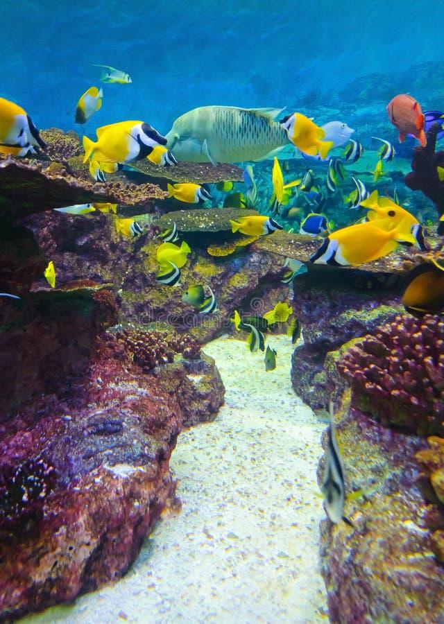 Peixes de Torpical em Seoul Coex Oceanarium foto de stock royalty free
