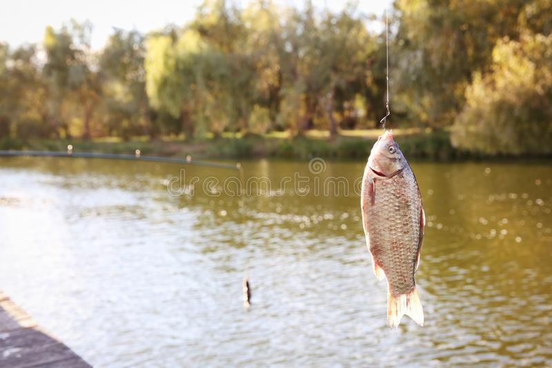 Peixes de travamento no gancho no rio imagens de stock