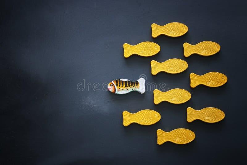 peixes diferentes que nadam oposto à maneira das idênticas Conceito da coragem e do sucesso Fundo do quadro-negro foto de stock royalty free