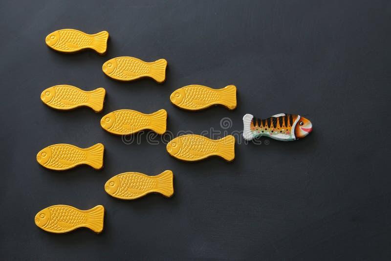 peixes diferentes que nadam oposto à maneira das idênticas Conceito da coragem e do sucesso Fundo do quadro-negro foto de stock