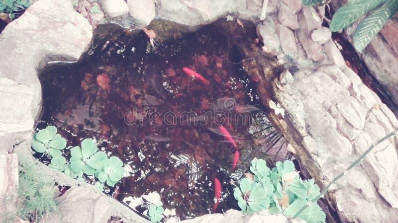 Peixes do animal de estimação fotografia de stock