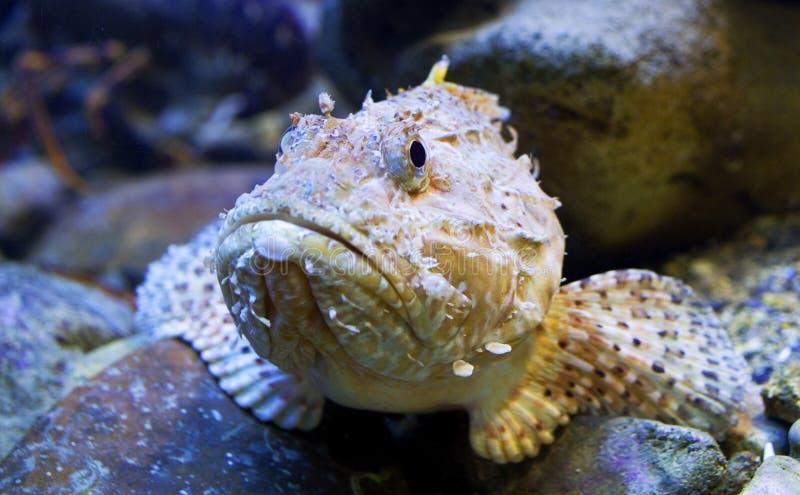 Peixes do aquário imagens de stock royalty free