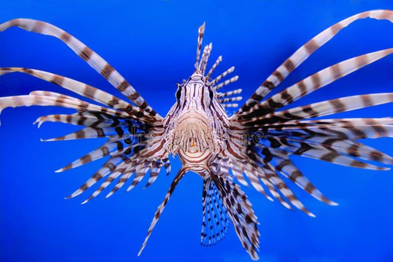 Peixes do aquário imagens de stock