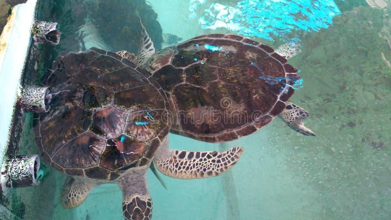 Peixes do aquário que olham demasiado bons imagem de stock royalty free