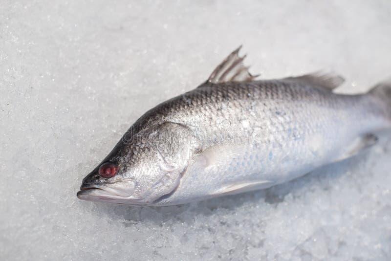Peixes do badejo no gelo esmagado fotos de stock royalty free
