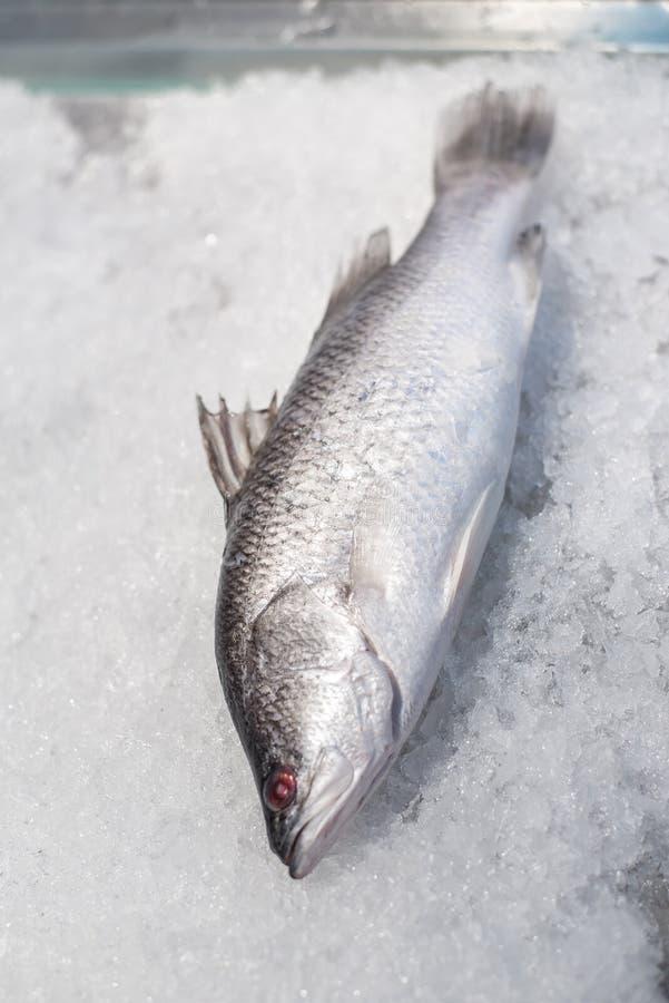 Peixes do badejo no gelo esmagado imagens de stock
