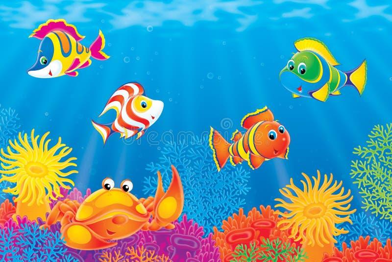 Peixes do caranguejo e do coral ilustração royalty free