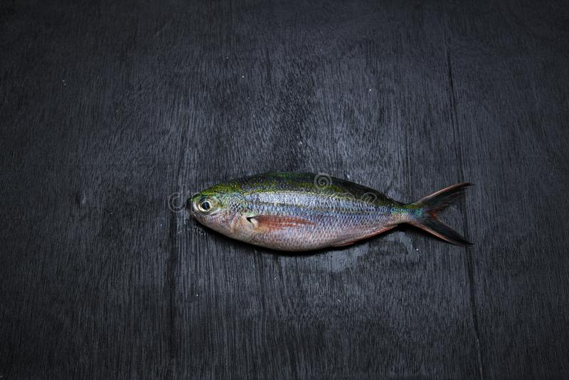 Peixes do corredor de arco-íris foto de stock