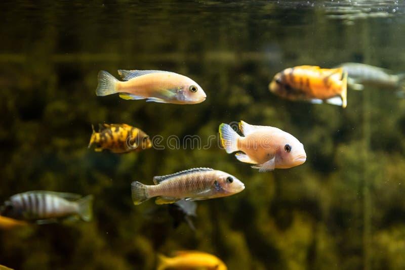 Peixes do mar exóticos em um aquário fotos de stock royalty free