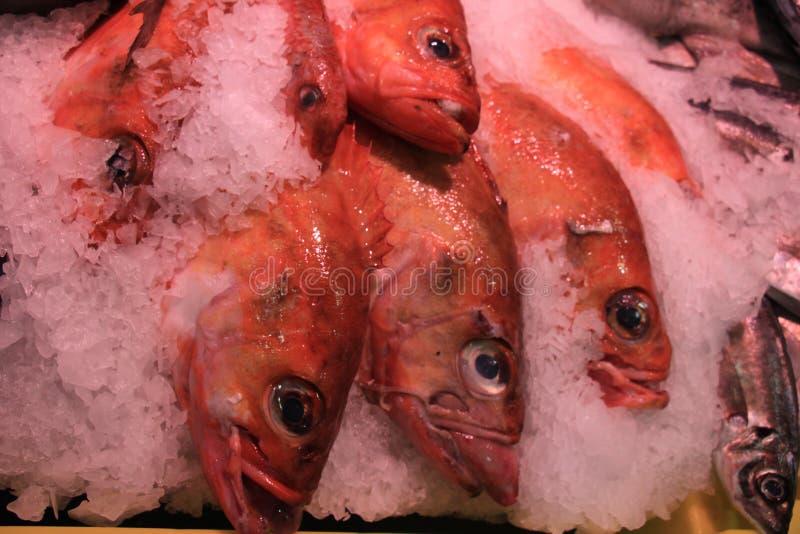 Peixes do mar frescos no gelo esmagado fotografia de stock