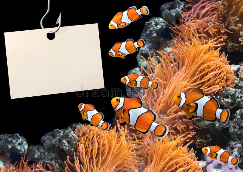 Peixes do palhaço e folha vazia de um papel em um gancho de pesca fotografia de stock