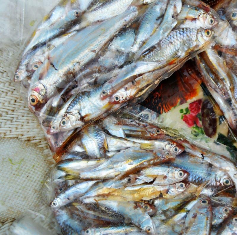 Peixes do peixinho de rio imagens de stock