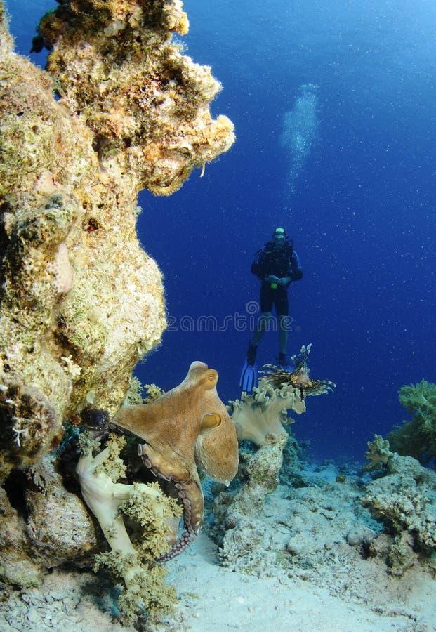 Peixes do polvo e do leão com mergulhador de mergulhador fotografia de stock