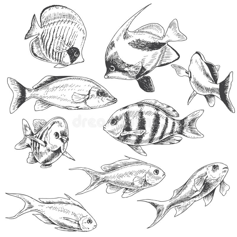 Peixes do recife ajustados ilustração do vetor