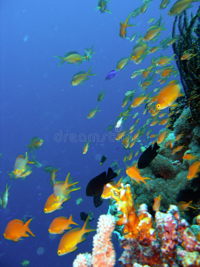 Peixes do recife coral fotos de stock