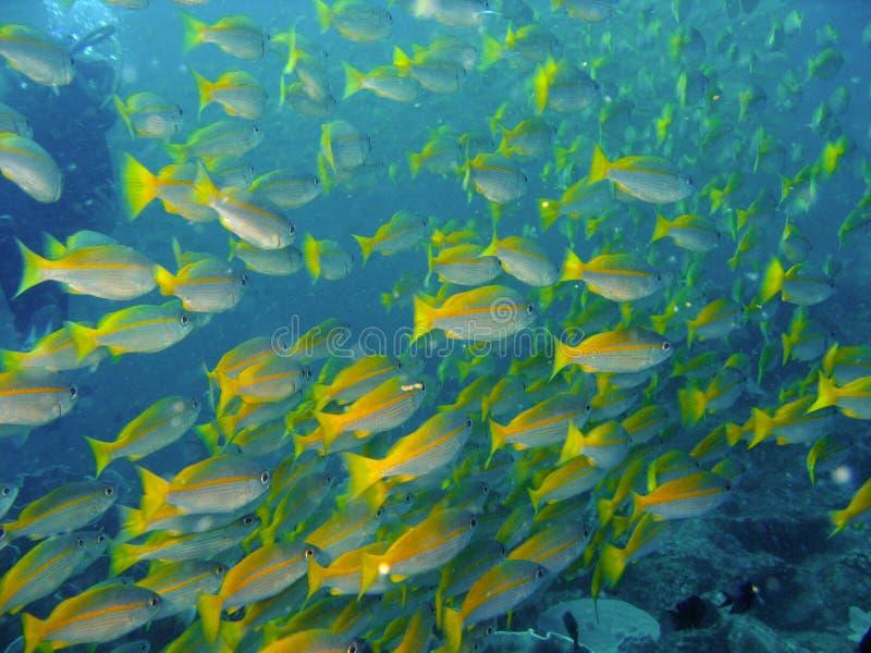 Peixes do recife coral fotografia de stock