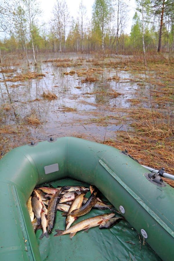 Peixes do rio no barco de borracha imagem de stock