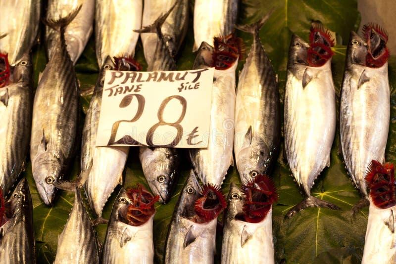 Peixes do tane de Palamut no gelo em um mercado Istambul foto de stock royalty free