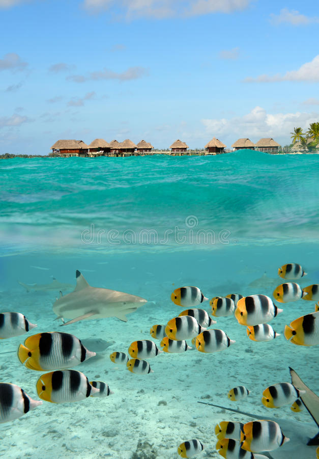 Peixes do tubarão e de borboleta em Bora Bora foto de stock