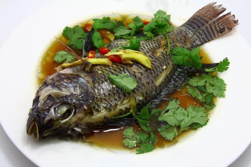 Peixes do vapor fotografia de stock