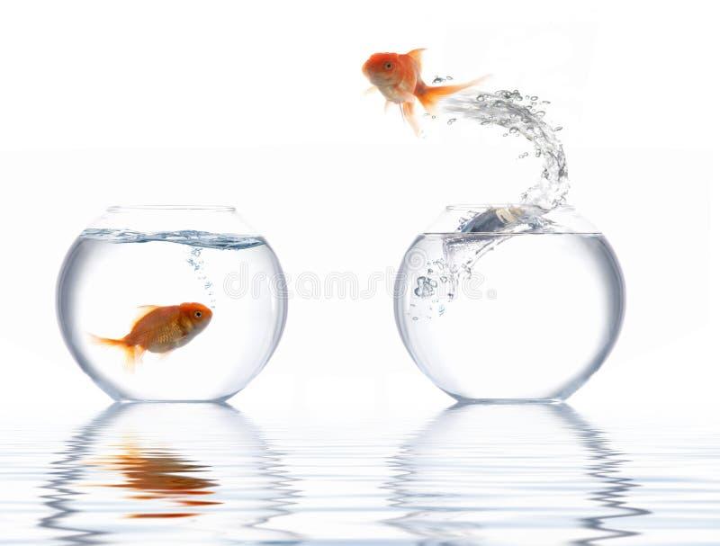 Peixes dourados de salto imagens de stock royalty free