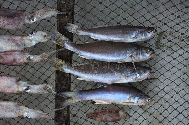 Peixes e calamar salgados secados fotos de stock royalty free