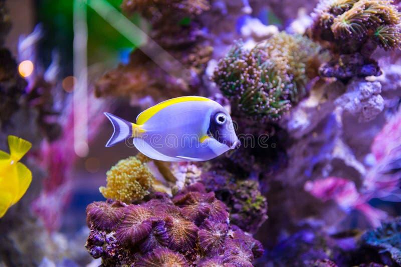 Peixes e corais foto de stock