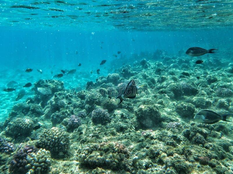 Peixes e corais sob o mar imagens de stock
