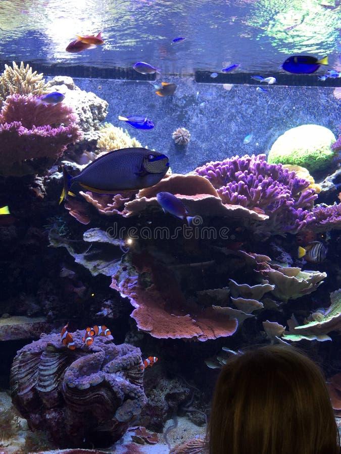 Peixes e coral imagem de stock royalty free