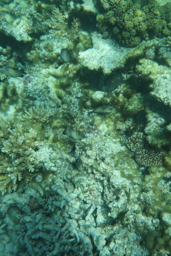 Peixes e Coral Reef tropicais no mar pacífico do oceano foto de stock