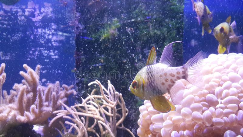 Peixes e coral subaquáticos do mundo fotografia de stock royalty free