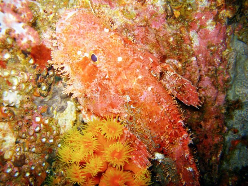 Peixes e recife coral fotos de stock