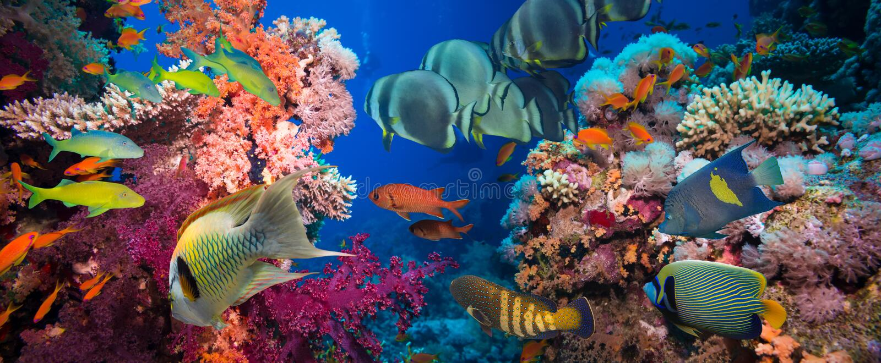 Peixes e recife de corais tropicais foto de stock