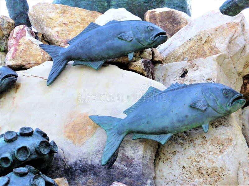 Peixes e sealife de pedra foto de stock royalty free