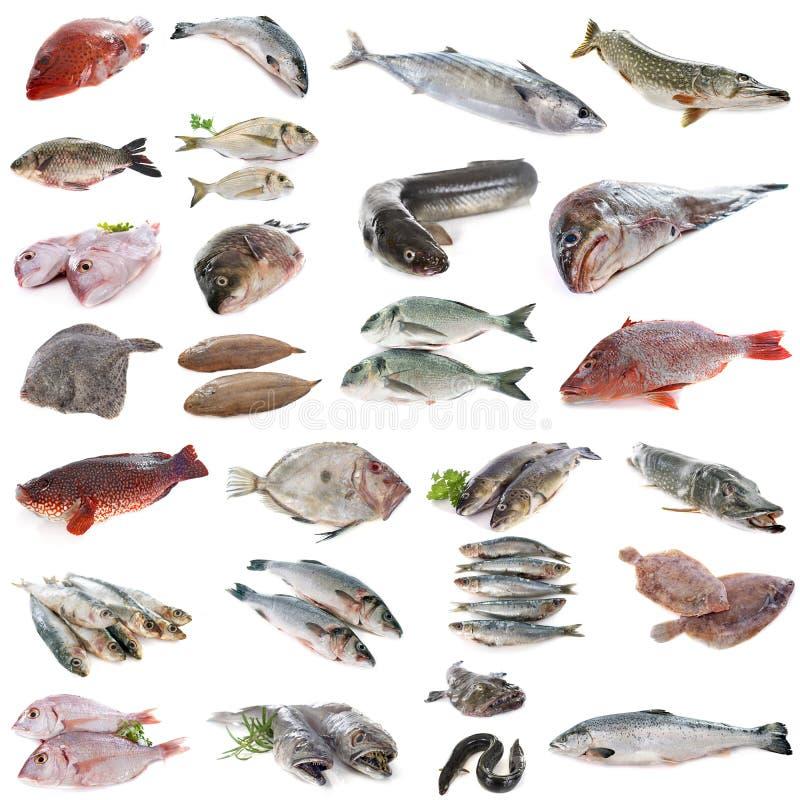 Peixes em estúdio imagens de stock royalty free