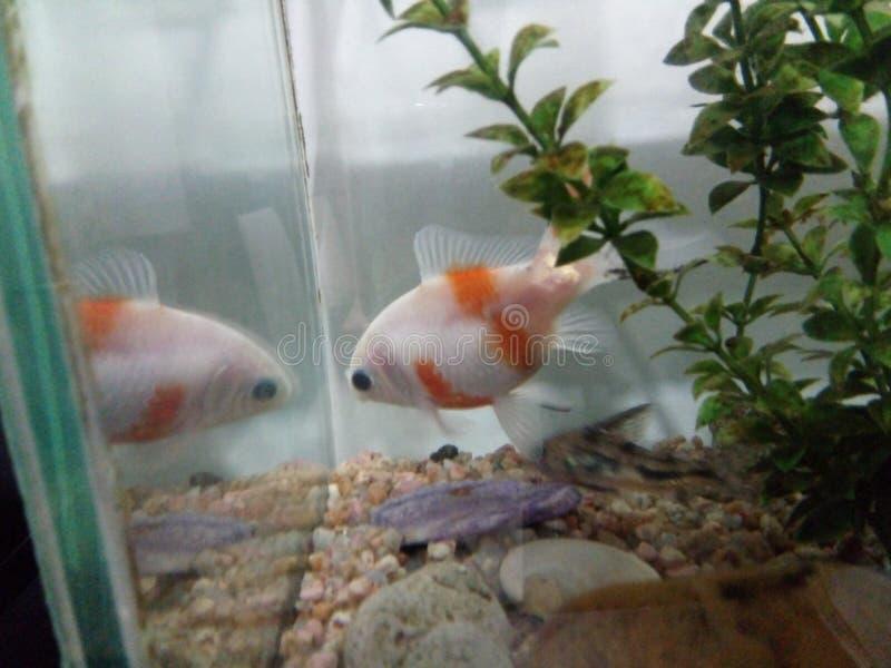 Peixes em minha casa imagem de stock