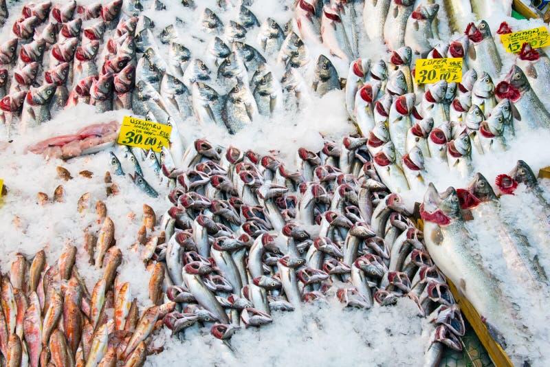 Peixes em um mercado em Istambul imagem de stock