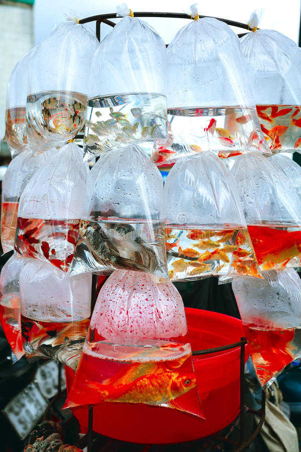 Peixes em um pacote imagem de stock