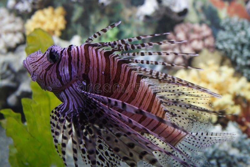 Peixes exóticos fotos de stock
