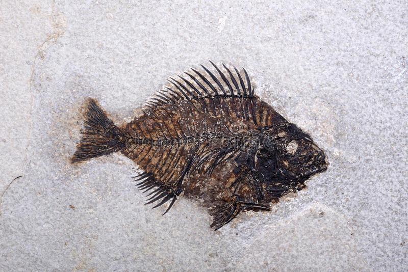 Peixes fossilizados fotos de stock royalty free