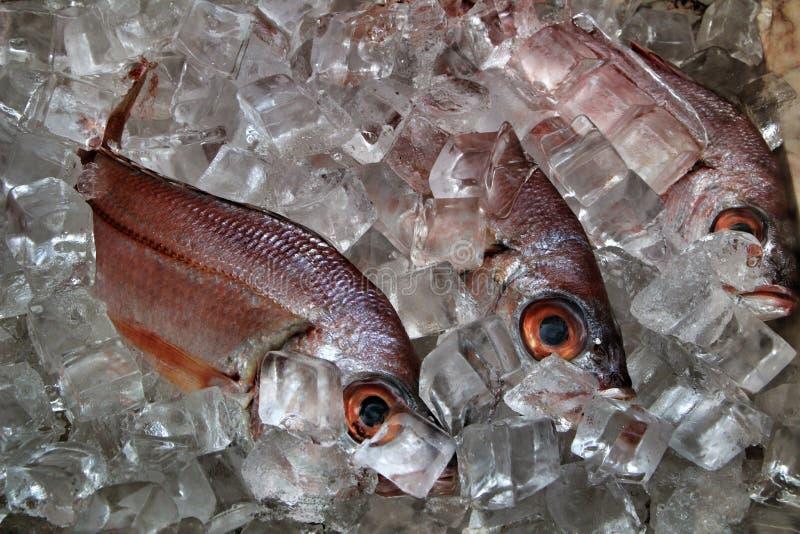Peixes frescos com gelo para a venda imagens de stock