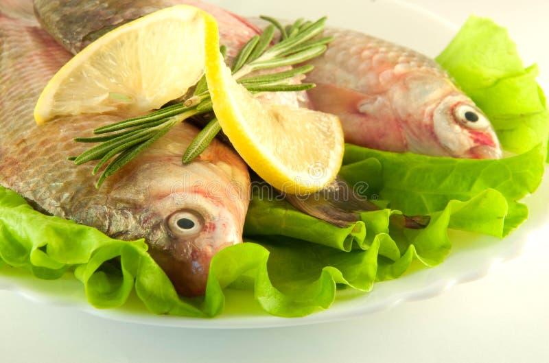 Peixes frescos, crucian com um limão fotografia de stock