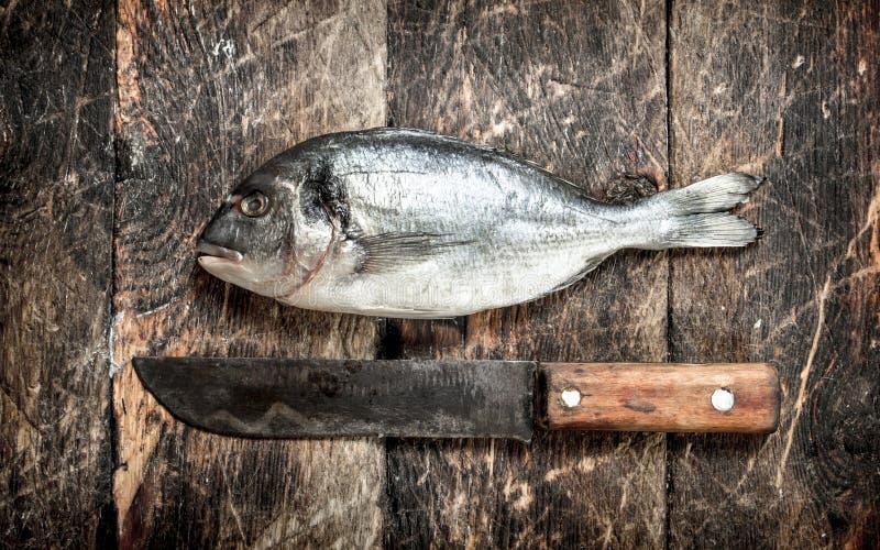 Peixes frescos crus foto de stock