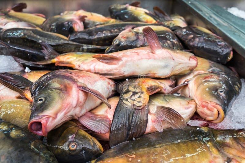Peixes frescos da carpa vendidos no mercado da cidade fotografia de stock royalty free