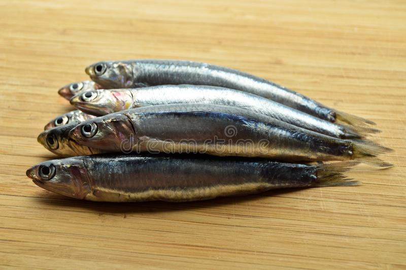 Peixes frescos do hamsi imagens de stock