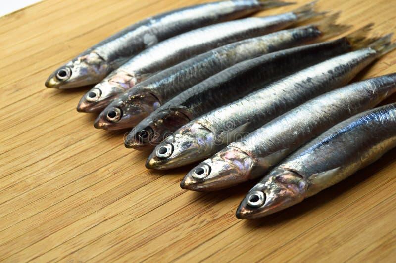 Peixes frescos do hamsi imagem de stock