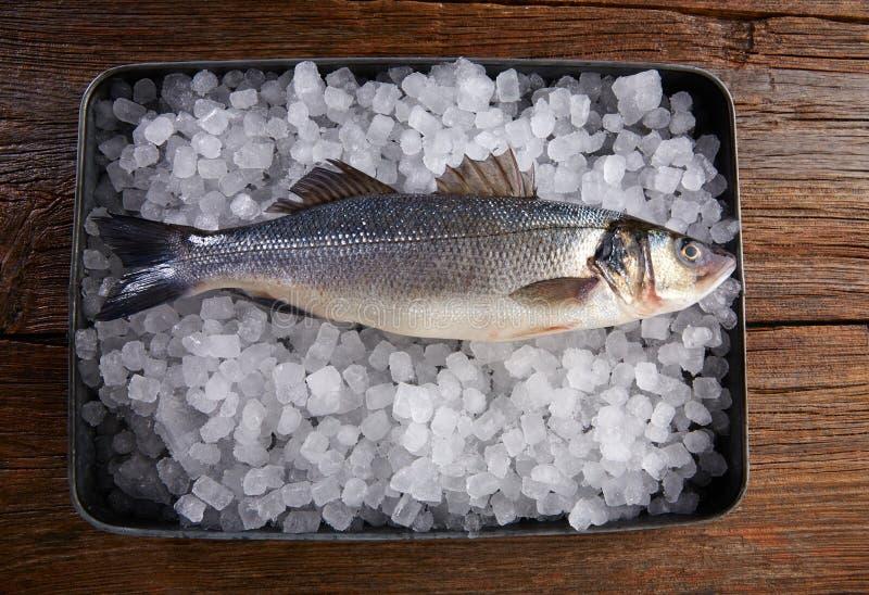 Peixes frescos do Seabass no gelo e na madeira imagem de stock